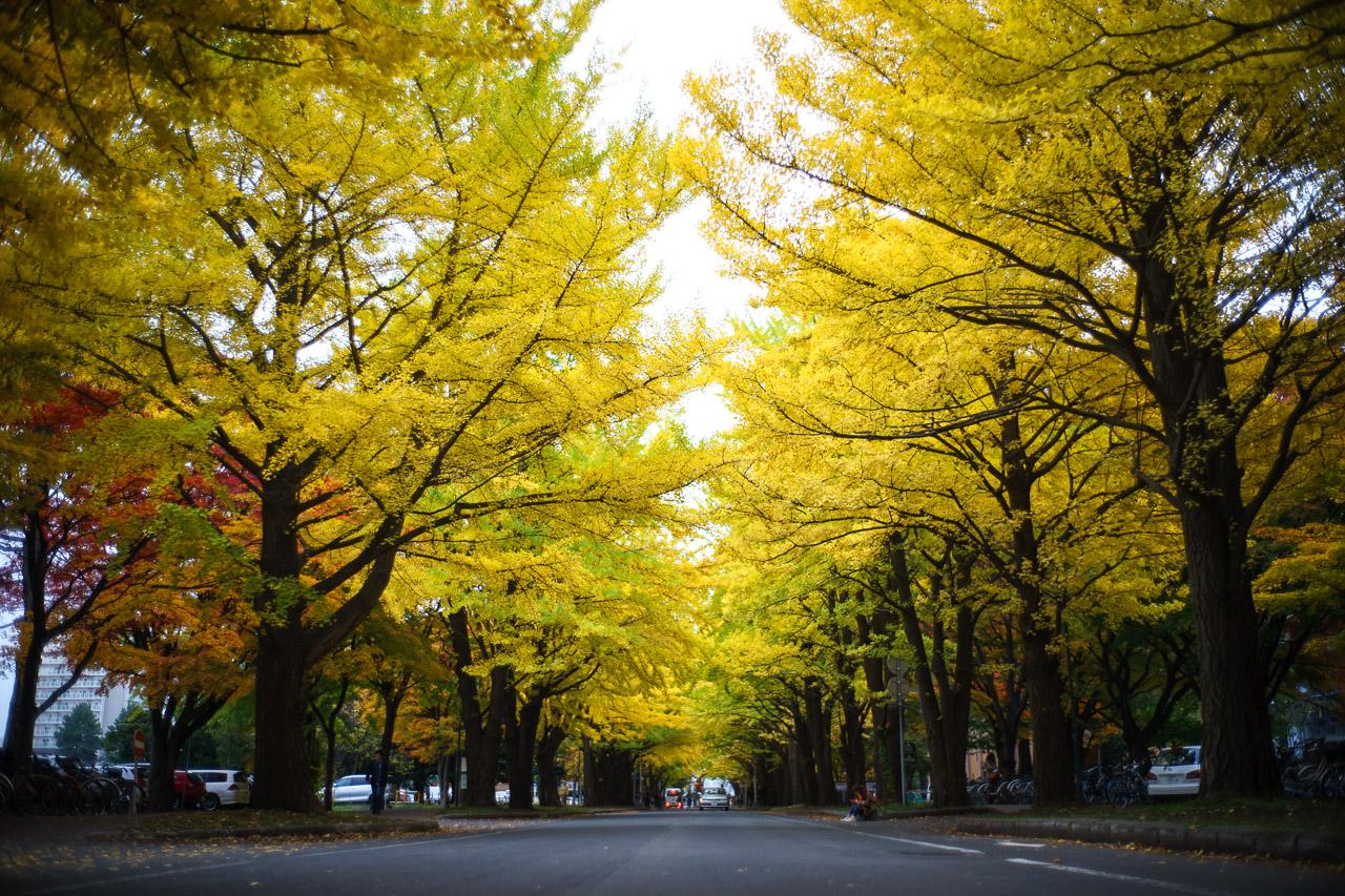 The Hokkaido University Campus From Summer To Autumn